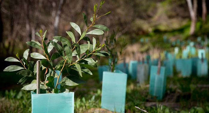 Organic Growth Masterclass: Grayce, backed by Literacy Capital