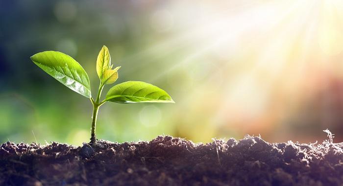 Organic Growth Masterclass: Collingwod Lighting, backed by Baird Capital